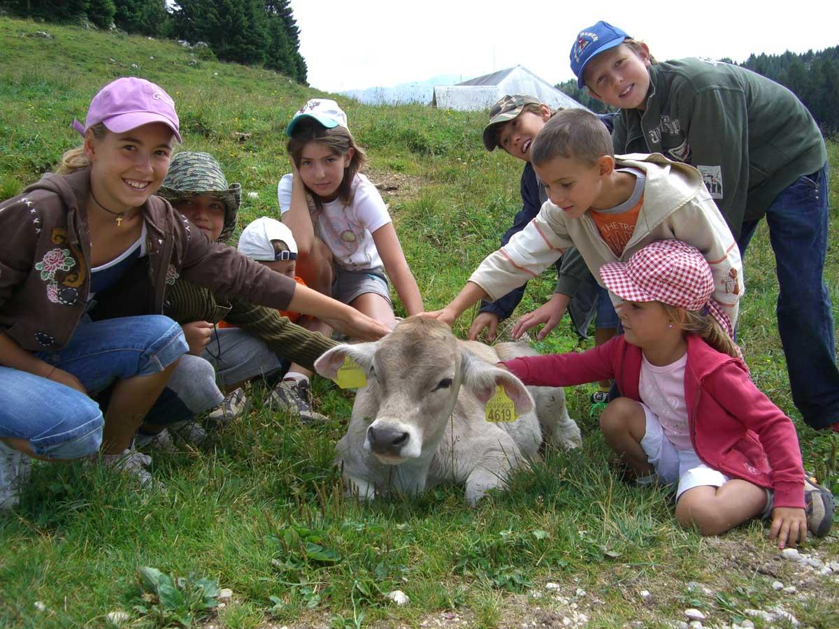 In montagna con despar alla scoperta delle malghe asiago for Offerte weekend asiago
