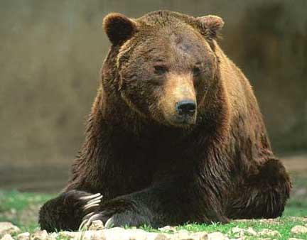 orso grande