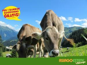 vacche2