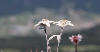 Last Minute vacanza in montagna – Giugno 2019